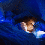 The Best Night Light For Toddlers (2019 Reviews)