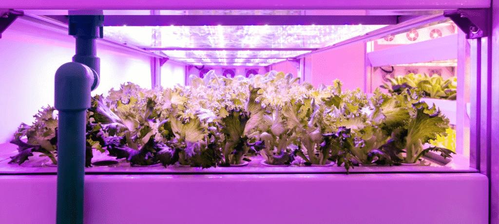 best led light for 4x4 grow tent