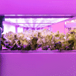 The Best LED Light For 4x4 Grow Tent Reviews