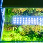 4 Best LED Aquarium Lighting For Plants 2021