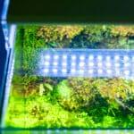 4 Best LED Aquarium Lighting For Plants 2021