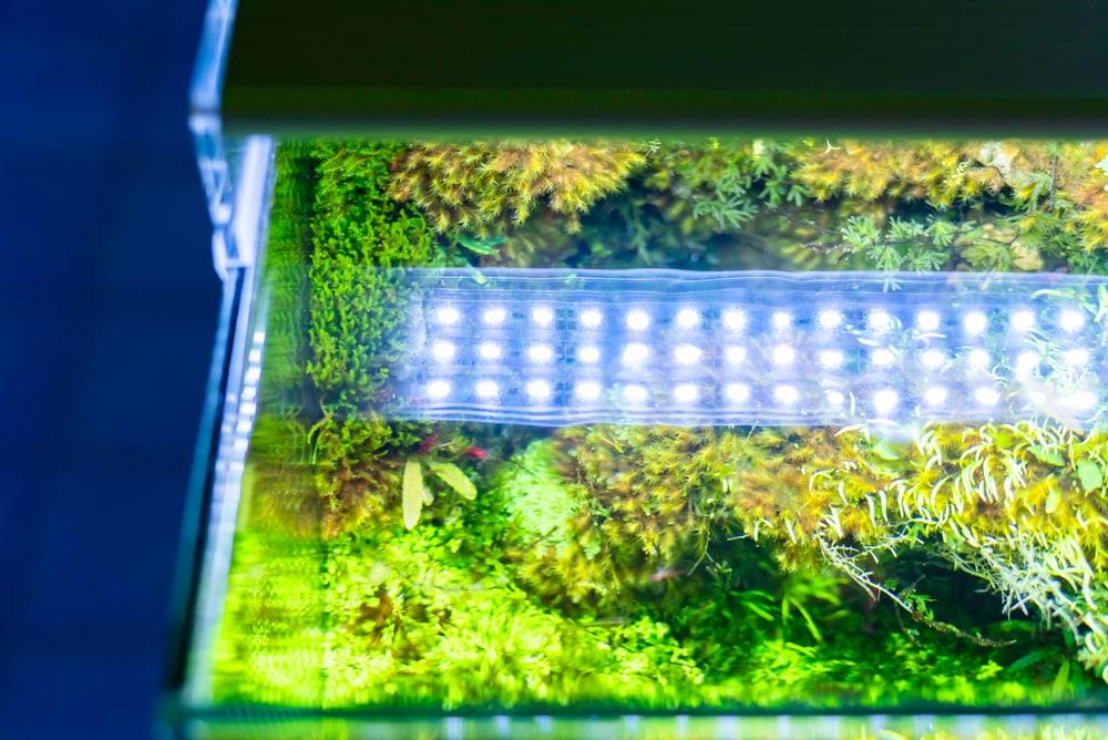 Best LED Aquarium Lighting For Plants